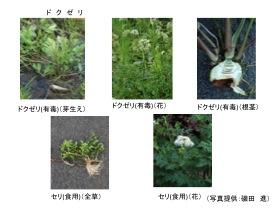 yuudoku006