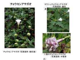yuudoku011