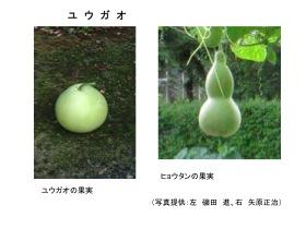 yuudoku012